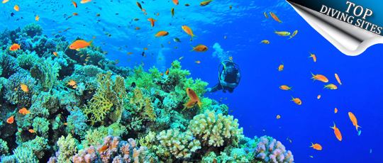 Top Diving Sites
